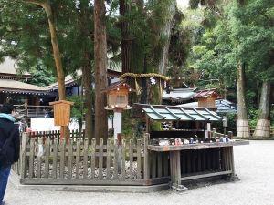 09巳の神杉